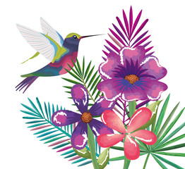 tropical and exotic garden with hummingbird vector illustration design