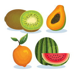 set tropical fresh fruits vector illustration design fruits, leaves and flowers, summer and exotic concept