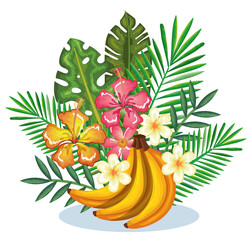 tropical garden with banana cluster vector illustration design fruits, leaves and flowers, summer and exotic concept