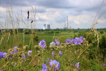 Fioletowe polne kwiaty, część jest nieostra, pojedyncze trawy, w tle nieostra łąka, drzewa i wielkie kominy fabryczne, z których unosi się dym, chmury na niebie - fototapety na wymiar