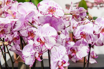 A large bouquet of white and pink orchids. Close up.