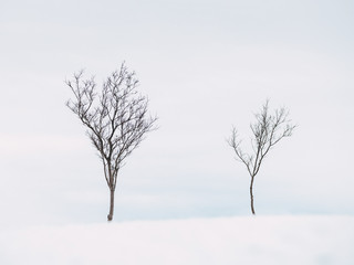 Bare trees on snow covered field Wall mural