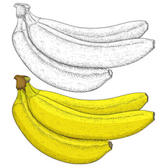 Banana. Hand drawn sketch