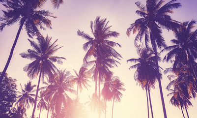 Printed kitchen splashbacks Purple Color toned picture of coconut palm trees silhouettes at sunset, vacation concept.