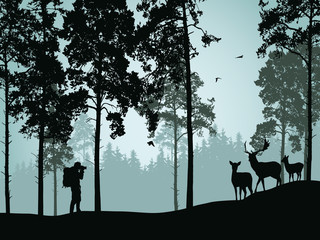 Vector illustration of coniferous forest with deer doe with a fawn and a tourist