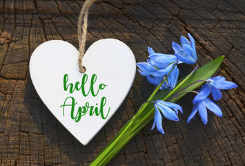 Hello April greeting card with blue first spring flowers.Decorative white heart and blue snowdrops.Blue Scilla flower (Scilla siberica,Squill) on wood background. Springtime concept.Selective focus. Wall mural