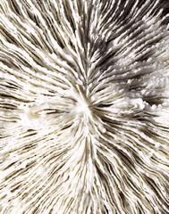 Close-up ridged pattern on seashell