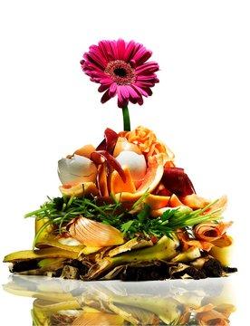 Flower compost food pile