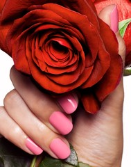 Close-up woman's hand holding red rose with pink fingernails