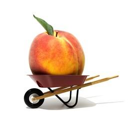 Ripe peach in a wheelbarrow
