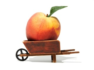 Ripe peach in a wheelbarrow on white background