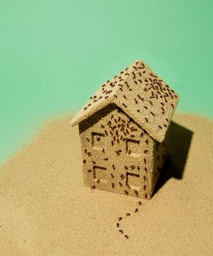 Ants crawling miniature house against green background