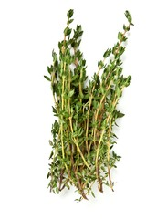 Bunch of thyme on white background