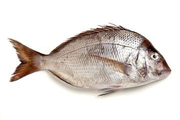 Raw whole fish on white background