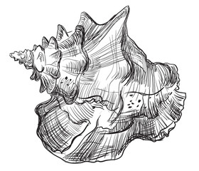 Hand drawing seashell-13