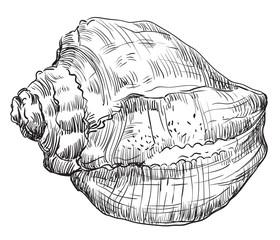 Hand drawing seashell-14