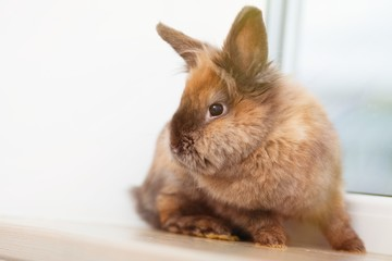 Cute brown rabbit