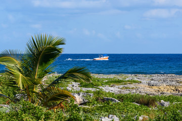 Landscape of a tropical coastline with palm trees, sea and blue sky. Motor boat racing through the sea.