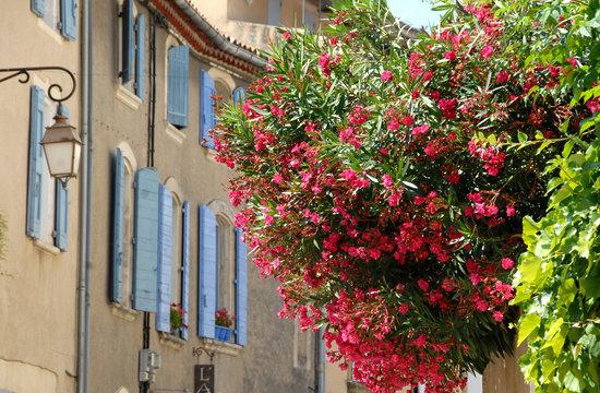 Lourmarin (Vaucluse) Lauriers roses et volets bleus, luberon, provenceFrance