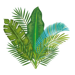 tropical and exotic palms leafs vector illustration design