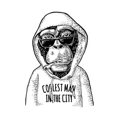 Monkey hipster dressed in hoodie