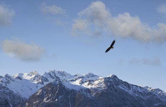 Eagle flying near Alaskan mountains