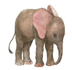 elephant illustration watercolor