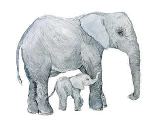elephant, elephant ,watercolor, animal, fauna, zoo, graphics,cute animals,watercolor animal, watercolor elephant