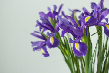 Delicate holiday bouquet of iris flowers on a light background.
