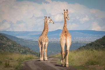 The Mighty Giraffe