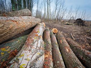 Baumstämme im Wald bei Forstarbeiten