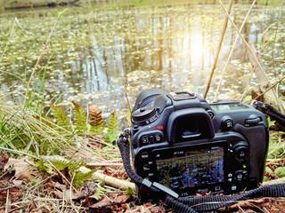 The camera shoots nature. Toning