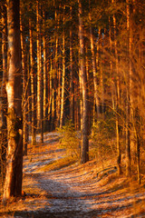 Picture of trees inforest in late autumn