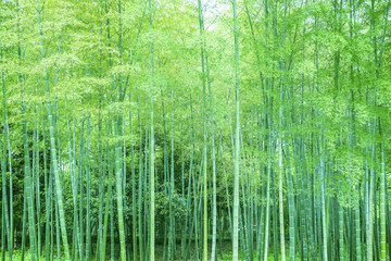Photo sur Plexiglas Bamboo Bamboo and bamboo forest