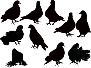 ten pigeon silhouette collection on white
