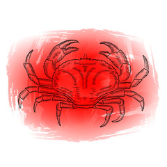 A picture of a crab on a red background. Sketch, watercolor, vector illustration