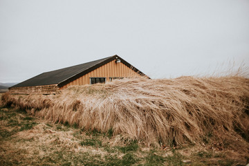Traditional icelandic house with green turf roof in a forest. Iceland