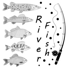 Sketch on a theme fishing, a river fish, fish tackles. Popular river fish are pike, crucian carp, perch, pike perch, carp. Sketch of drawing, vector illustration