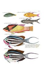 Illustration of a fish.