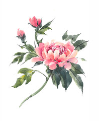 Watercolor flowers. Blooming pink peony. Watercolor background.