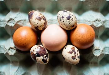 Quail and hen eggs in egg bark