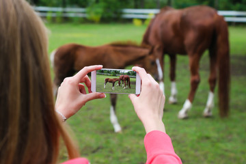 Woman holding smartphone and taking picture of horses.