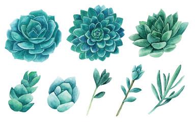 Watercolor succulents clip art. Cactus clipart set