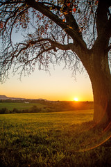 sunset in autumn with tree