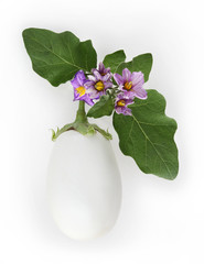white eggplant with flowers and leaf isolated on white background top view food