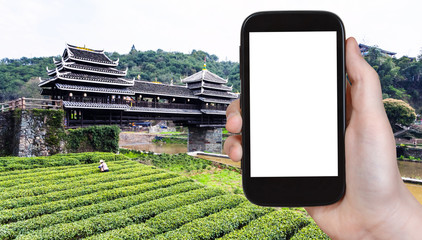 tourist photographs tea field and Fengyu bridge