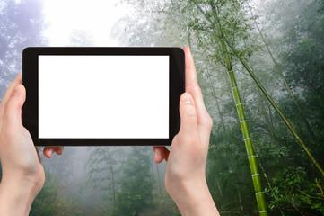 tourist photographswet rainforest in Longsheng