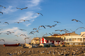 Seagulls in the fishing village at ocean beach .