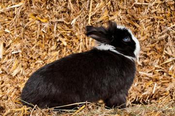 Schwarzweißes Kaninchen sitzt auf einem Strohballen