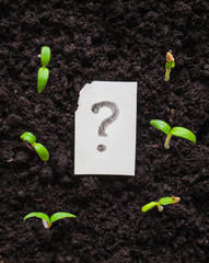 The question mark and plant. 